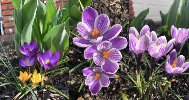 Act Happy Week Spring Flowers
